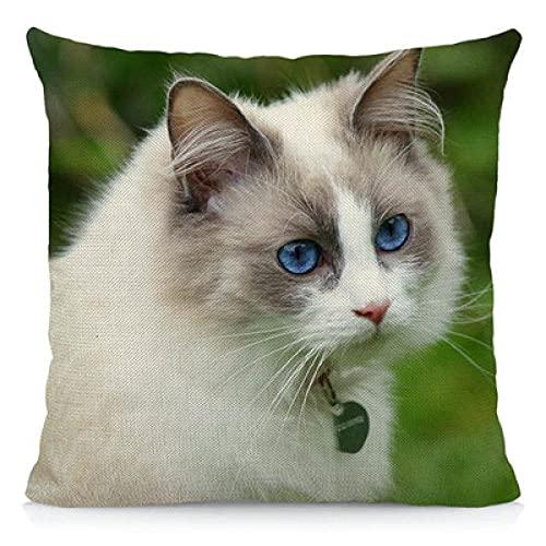 Funda de cojín con diseño de Gato Ragdoll 45x45cm Funda de Almohada Decorativa para el hogar con Estampado Animal Un Paquete de 2 Piezas