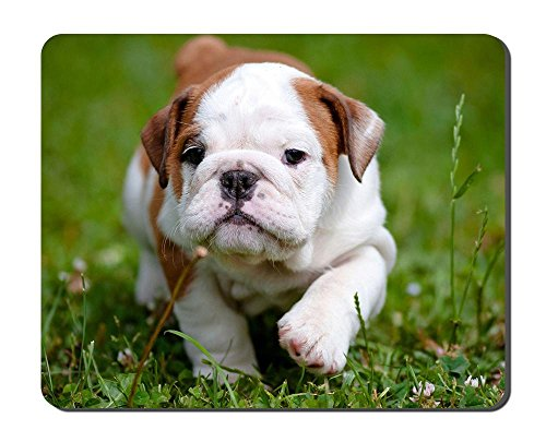 Bulldog Cute Puppy Grass Animal Picture Game Office Mouse Pad (8.2x10.2inches)