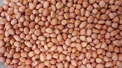 Peanut Plant Seeds, Early Spanish Peanut (Arachis Hypogaea) 100 Untreated Seeds