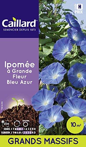 Caillard PFCD20580 Graines de Ipomée Grande Fleur Bleu Azur 15 m²