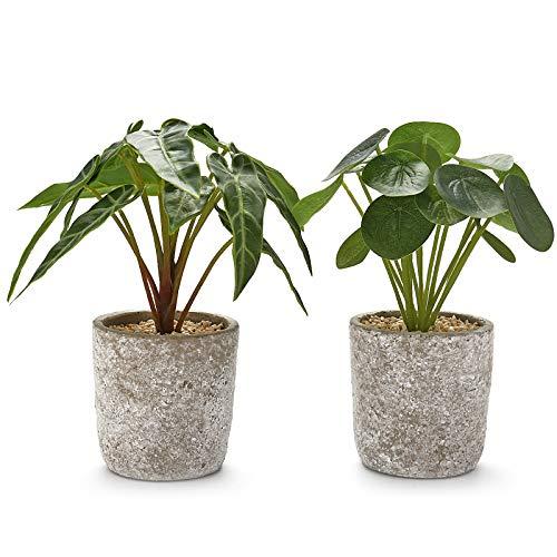 HKY Set mit 2 künstlichen Pflanzen in Zementtopf 22,9 x 19,1 cm Faux Pilea und Alocasia Broad-Leaf Fake Greenery für Home Office Schreibtisch Regal Tischdekoration