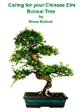 Caring For Your Chinese Elm Bonsai Tree