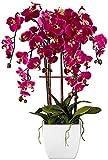 50 piezas/bolsa bonsái semillas de orquídea, hermosa phalaenopsis orquídea hogar jardín planta orquídea maceta calidad semillas de flores niños regalo 3