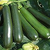 Semi Pacchetto: 10 - Semi: Ricompensa F1 Hybrid Squash Seeds - Uno dei Primi, ad Alto rendimento Zucchini !!!!