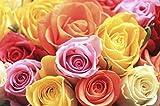 50 Semillas de Rosa Variada