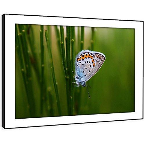 BBFA256C arte enmarcado cuadro de la pared de impresión - (blanco con alas de la...