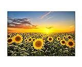 Panoramabild 120x80 cm - Sonnenblumen-Feld Helianthus beim