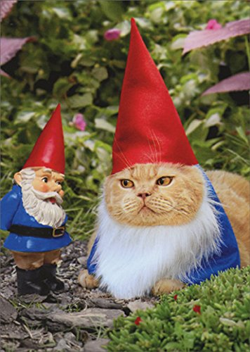 Avanti Gnome Cat Funny New Home Congratulations Card
