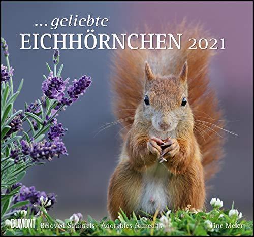 ... geliebte Eichhörnchen 2021 - DUMONT Wandkalender - mit den wichtigsten Feiertagen - Format 38,0 x 35,5 cm