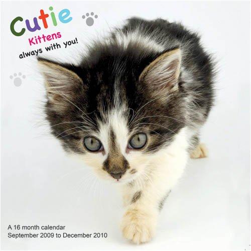 Cutie Kittens 2010 Wall Calendar (Kittens 2010 Wall Calendar)