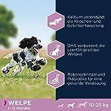 Eukanuba Puppy Medium Breed Trockenfutter (für Welpen mittlerer Hunderassen, Premiumnahrung mit Huhn), 15 kg Beutel - 7