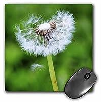 3drose LLC 8x 8x 0.25インチマウスパッド、Wishing–Spring Flower–Dandelion ( MP _ 52819_ 1)