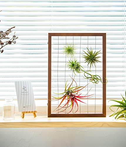 Mkono Air Plant Frame Tillandsia Wall Display, 7 7/8 Inch, 16 Inch 5 A wonderful way to display your tillandsias. This frame allows air and light to pass through. With hooks at the back, easy to hang anywhere, wall, windows or outdoor.