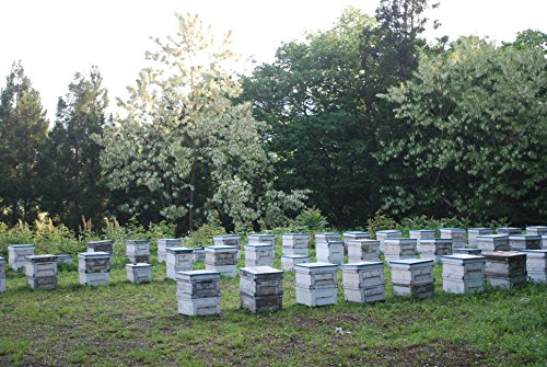 小林養蜂園『群馬県沼田市産アカシア蜜』
