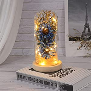 Mobestech Enchanted Flower Lamp, Artificial Sunflower in Glass Dome, LED Flower Lamp for Valentines Day Mothers Day, 1PCS Rosy