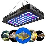 YWT 165W Acuario de Espectro Completo Regulable Luz LED Tanque de Peces Decoración de Arrecife LED Luz de atenuación Manual, para Peces de Agua Salada Arrecife de Coral