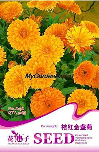 Hot vente 30pcs Pot Marigold Graines, chrysanthème, Graines Bonsai Fleur, Livraison Pot bricolage Plante jardin gratuit