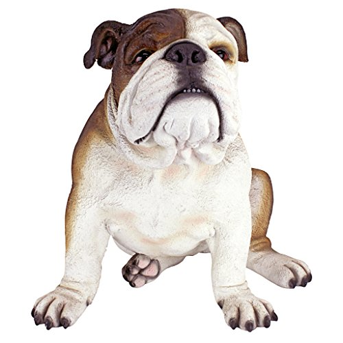 Design Toscano Buster il Bulldog Decorazione in stile British ìnglese, poliresina, a colori, 41 cm