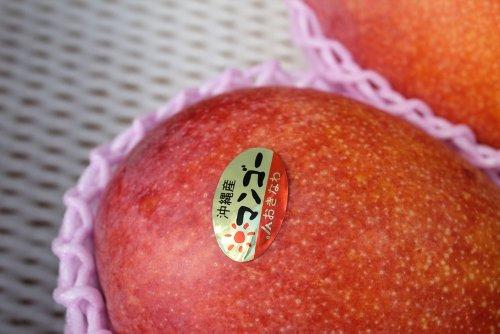 沖縄県産完熟 マンゴー 1玉 約500g 大玉!