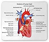 Ambesonne Educational Mouse Pad, Structure of The Heart Human Body Anatomy Organ Veins Cardiology, Rectangle Non-Slip Rubber Mousepad, Standard Size, Coral Red