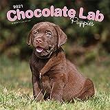 Chocolate Labrador Retriever Puppies - Braune Labradorwelpen 2021 - 16-Monatskalender mit freier DogDays-App: Original BrownTrout-Kalender [Mehrsprachig] [Kalender] (Wall-Kalender)