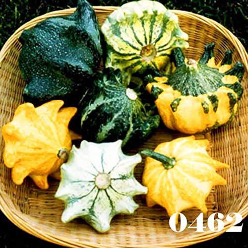 Ultrey Samenshop - Seltene Kürbis-Samen Zierkürbis Speisekürbis Gemüsesamen Riesenkürbis Kürbiskerne Zierpflanzen für Garten, Zäune, Pergolen