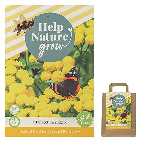 Blumenzwiebeln für Schmetterlinge und Bienen im Sommer in Geschenkverpackung - mehrjährig, viele botanische Sorten gemischt für idyllisches und buntes Beet im Garten - PREMIUM (3 Tanacetum vulgare)