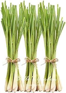 30pcs semillas originales de hierba de limón Cymbopogon citratus perenne Bonsai planta de bricolaje té de Plantas Planta d...
