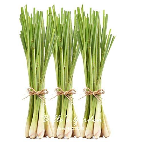 30pcs semillas originales de hierba de limón Cymbopogon citratus perenne Bonsai planta de bricolaje té de Plantas Planta de tiesto del jardín de bricolaje