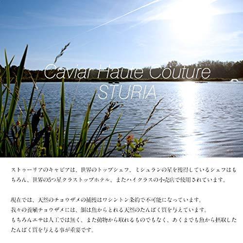 ストゥーリアフランス産キャビア(18g)【3〜4営業日以内に出荷】