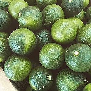 旬の味覚 大分有機かぼす農園 國枝さんの有機栽培 大分県産生かぼす2kg