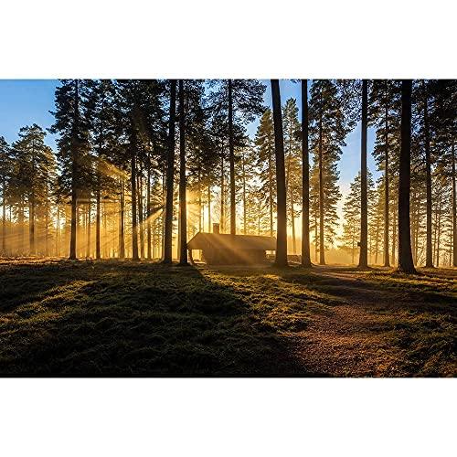 Accesorios de Fondo de fotografía de Vinilo, Fondo de fotografía de Paisaje de iluminación, Accesorios de fotografía de Estudio fotográfico A3 10x7ft / 3x2.2m