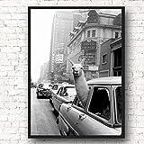 Lama In Einem Taxi New York City Schwarz Weiß Wandkunst