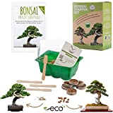 Bonsai Kit incl. eBook GRATUITO - Set de plantas con mini invernadero, semillas y suelo - idea de...
