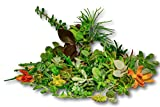 Fat Plants San Diego One Hundred Succulent Cuttings