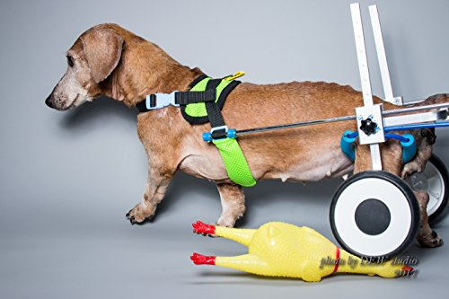 New! Two Wheels Adjustable Dog Wheelchair, cart, 7 Sizes for hind Legs Rehabilitation, 3D Soft Harness, Special Belly Band for Spine Protection and a Beautiful Leash are Free of Charge(3.New-XS-LW)