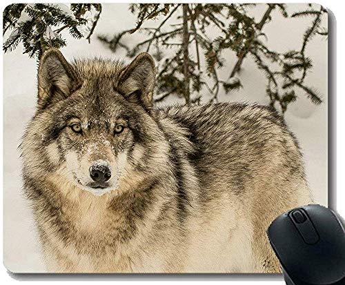 Gaming Mouse Pad 30 * 25 * 0.3cm Custom Wildlife Predator Winter Animal Forest Wolf Juego Antideslizante disenado Exclusivamente para computadora portatil
