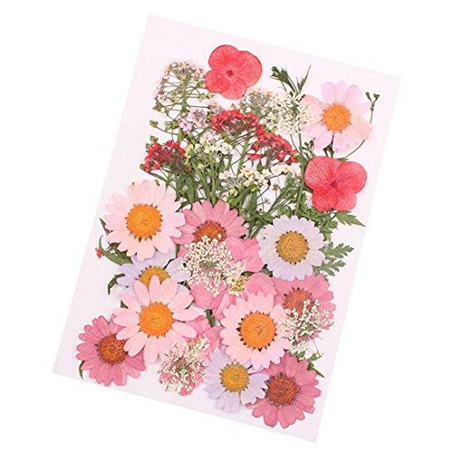 Cutogain Fleurs séchées pressées naturelles et biologiques, pour loisirs créatifs, décorations pour art floral, cadeau idéal pour une collection, A