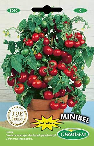 Germisem Minibel Semillas de Tomate 0.5 g