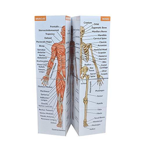 Human Anatomy Study Cube   Study 9 Parts of The Human Body   Perfect...