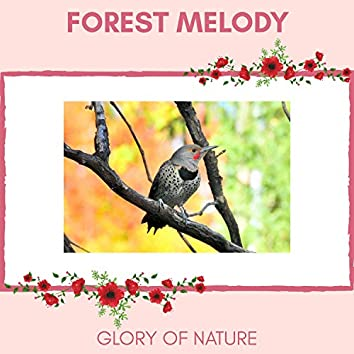 Forest Melody - Glory of Nature