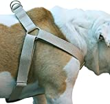Cotton Web Adjustable Dog Step-in Harness 4 Sizes Beige (XLarge: 21'-37' Chest; 1.2' Wide)