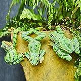 Yousiju 3 Unids/Set Creative Colgando Ranas Bonsai Subida Decorativa Frog Flowerpot Decoración Adorno para La Oficina En Casa Decoración De Jardín Al Aire Libre