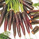 Semillas de 5M Purple Haze Zanahorias