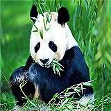 TTTTYYY Puzzle de 5000 Piezas para Adultos (Panda Comiendo bambú) Puzzle Rompecabezas Educativo el Alivio del Estrés Relajante Juego Divertido Desafío Intelectual Juegos Niños Adultos