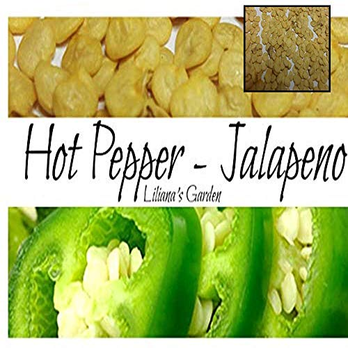PLAT FIRM SEMILLAS DE GERMINACION: Jalapeno Seeds M Hot Spicy Pepper Heirloom ENVÃO GRATIS Semillas y plantas