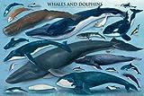 Educational - Bildung Waale und Delfine - Whales and