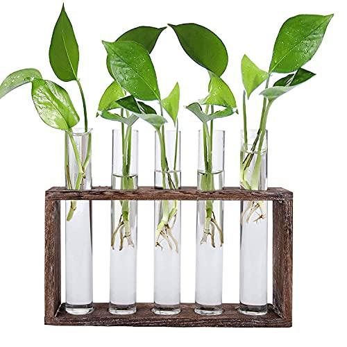 Jucoan Estación de propagación de cristal para colgar en la pared, 5 tubos de vidrio de prueba, con soporte de madera, florero hidropónico vintage