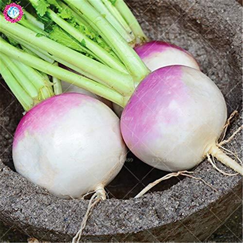 AGROBITS 100pcs Navet vert chinois réel radis cerise blanche organique végétale plantation comestible pour les fournitures agricoles de printemps