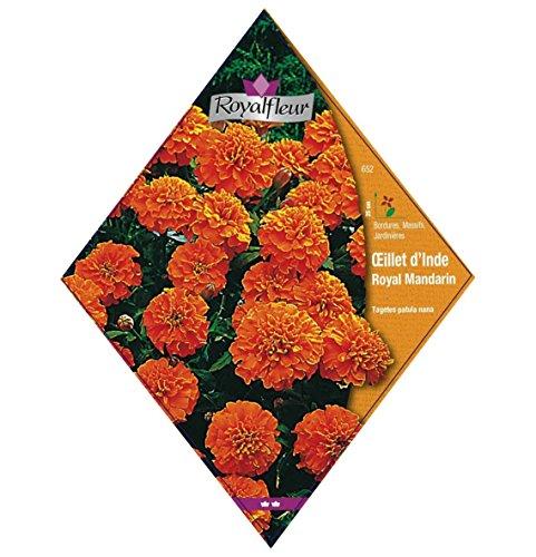 Royalfleur PFRV00652 Graines de Oeillet d'Inde Royal Mandarin